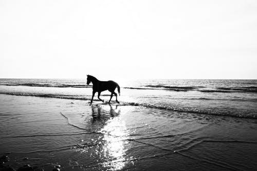 zand rijbak