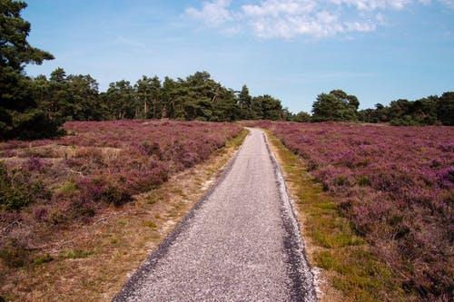 Vakantie Gelderland